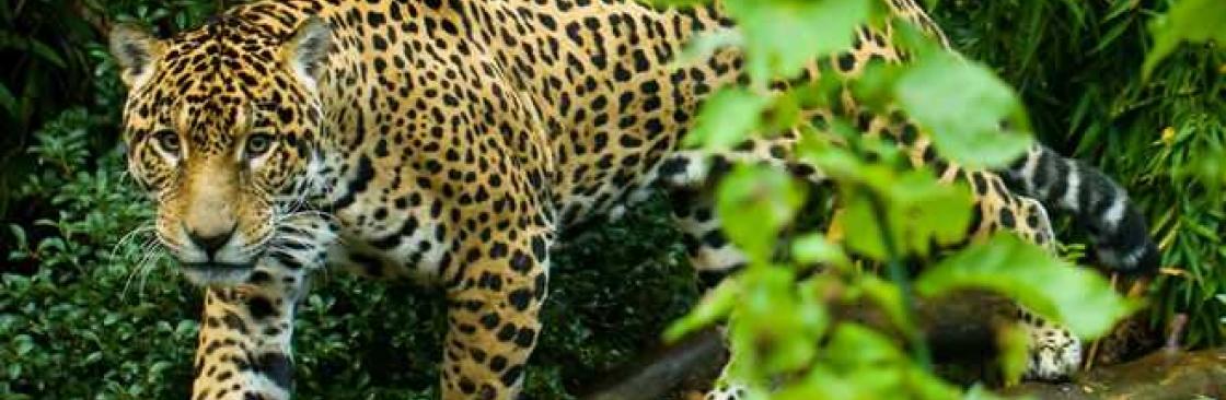 Eva Nunes Cover Image