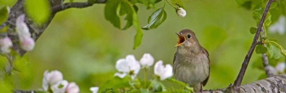 Belezas da Natureza Cover Image